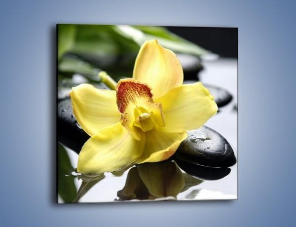 Obraz na płótnie – Żółty kwiat na mokrych kamieniach – jednoczęściowy kwadratowy K155
