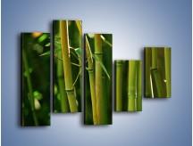 Obraz na płótnie – Bambusowe łodygi z bliska – pięcioczęściowy KN118W4