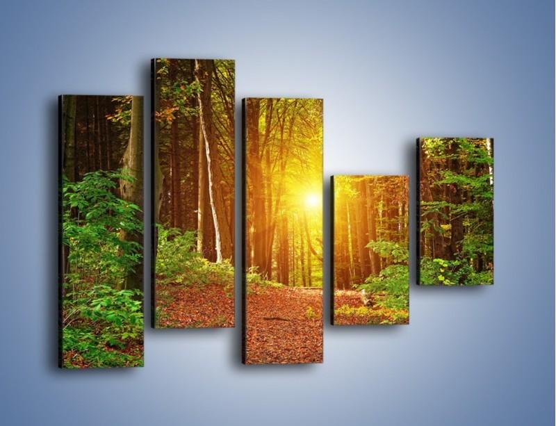 Obraz na płótnie – Polski krajobraz leśny – pięcioczęściowy KN1257AW4
