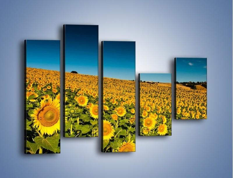 Obraz na płótnie – Słonecznikowe uśmiechnięte główki – pięcioczęściowy KN205W4