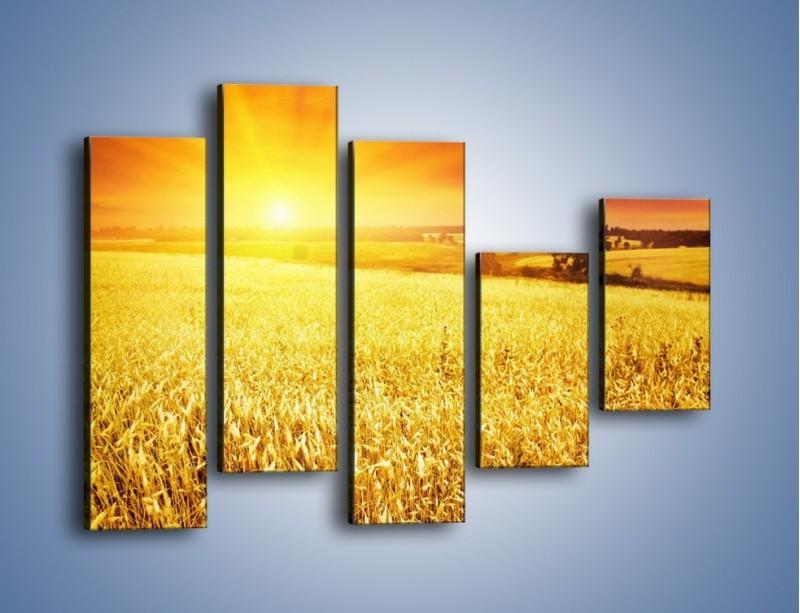Obraz na płótnie – Zboże złote jak słońce – pięcioczęściowy KN398W4