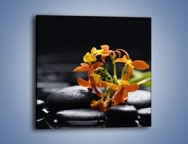 Obraz na płótnie – Gałązka małych storczyków – jednoczęściowy kwadratowy K160