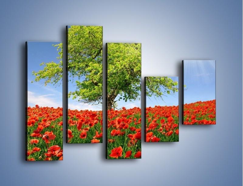 Obraz na płótnie – Cała łąka maków – pięcioczęściowy KN623W4