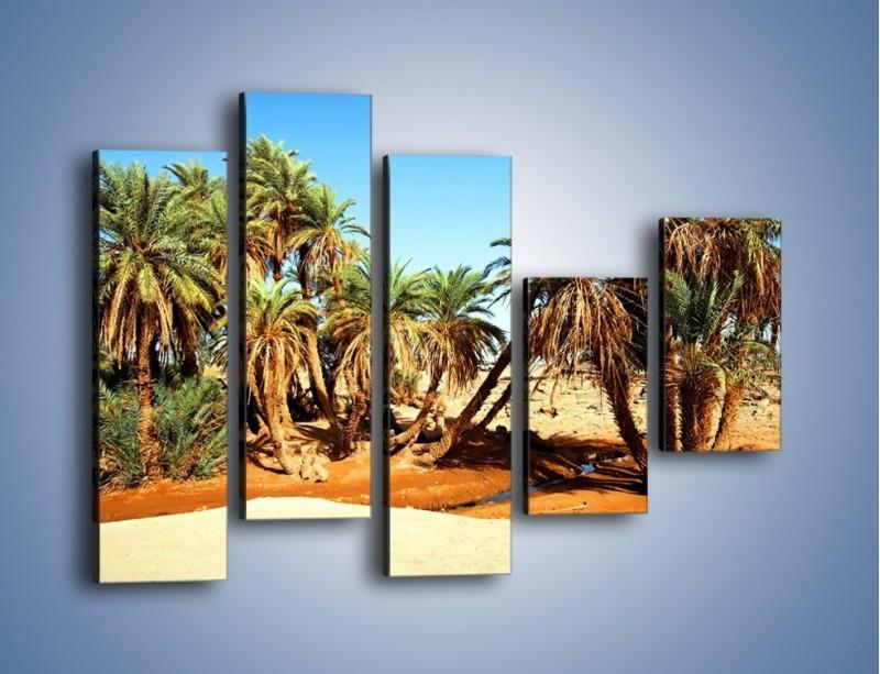 Obraz na płótnie – Palmowa rodzina w komplecie – pięcioczęściowy KN809W4