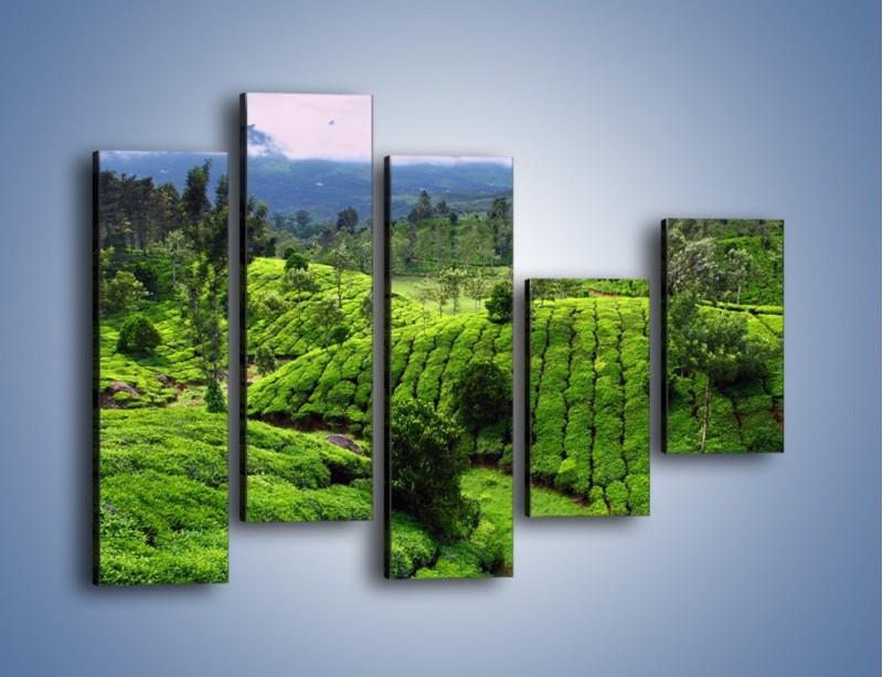 Obraz na płótnie – Rozległa zielona kraina – pięcioczęściowy KN872W4