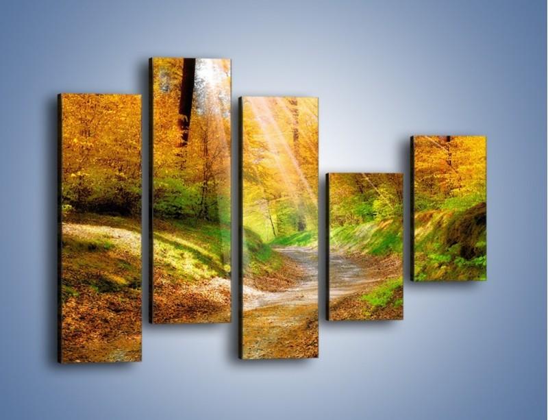 Obraz na płótnie – Promienną i słoneczną ścieżką przez las – pięcioczęściowy KN989W4