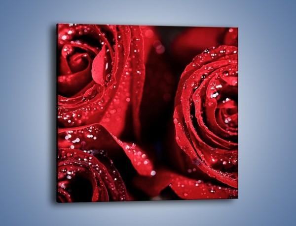 Obraz na płótnie – Róża czerwona jak wino – jednoczęściowy kwadratowy K170