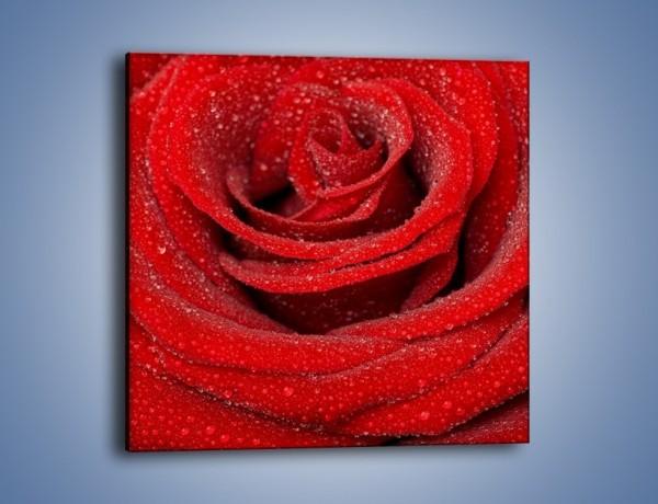 Obraz na płótnie – Czerwona moc w róży – jednoczęściowy kwadratowy K171