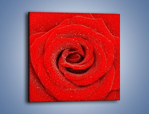 Obraz na płótnie – Kwiat dla wybranej kobiety – jednoczęściowy kwadratowy K172