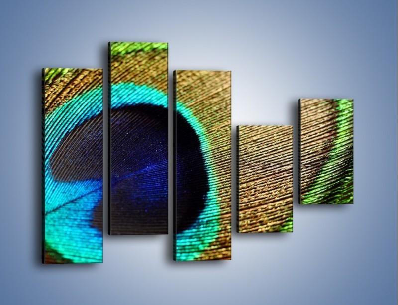 Obraz na płótnie – Cudowne pawie oko – pięcioczęściowy O048W4