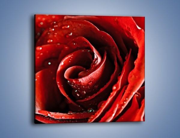 Obraz na płótnie – Kwiat w kolorze purpury – jednoczęściowy kwadratowy K173