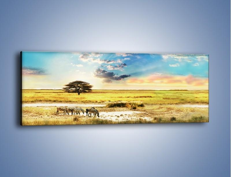 Obraz na płótnie – Zebry na sawannie – jednoczęściowy panoramiczny KN1298A