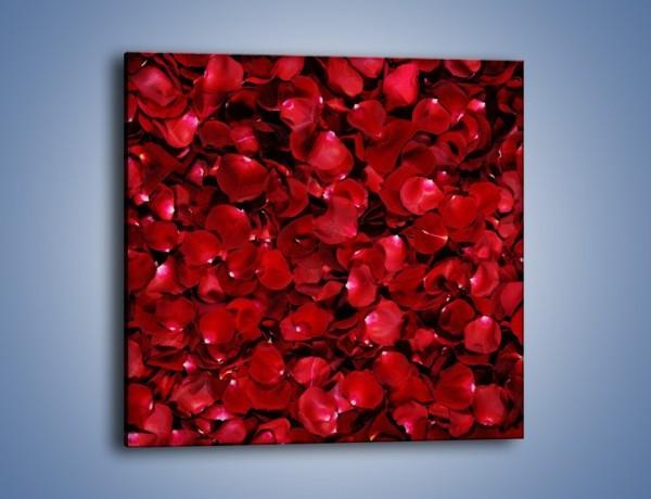 Obraz na płótnie – Dywan usłany płatkami róż – jednoczęściowy kwadratowy K175