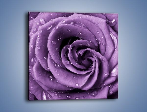 Obraz na płótnie – Głęboki fiolet zachowany w róży – jednoczęściowy kwadratowy K177