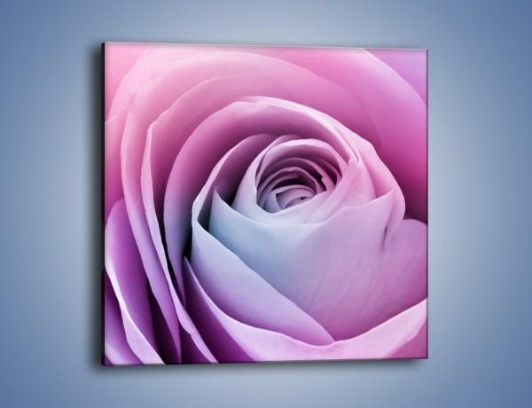 Obraz na płótnie – Pączek róży o poranku – jednoczęściowy kwadratowy K178