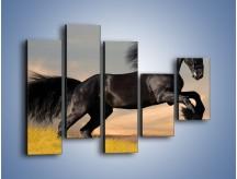 Obraz na płótnie – Czarny koń w galopie – pięcioczęściowy Z008W4