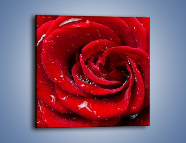 Obraz na płótnie – Kwiat pełen miłości – jednoczęściowy kwadratowy K179