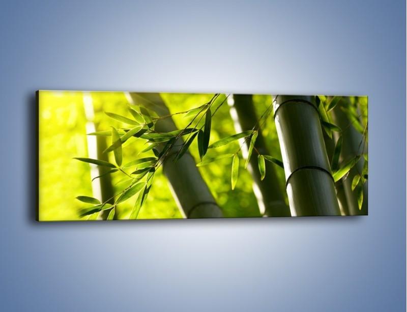 Obraz na płótnie – Twarde łodygi bambusa – jednoczęściowy panoramiczny KN1314A