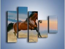Obraz na płótnie – Brązowy koń na pustyni – pięcioczęściowy Z011W4
