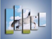 Obraz na płótnie – Białe obłoki i koń – pięcioczęściowy Z019W4