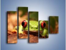 Obraz na płótnie – Bystre oczka małej żabki – pięcioczęściowy Z023W4