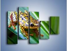 Obraz na płótnie – Kolorowy płaz na liściu – pięcioczęściowy Z026W4