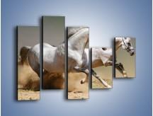 Obraz na płótnie – Białe konie w pustynnym galopie – pięcioczęściowy Z055W4