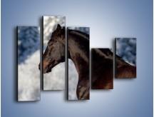 Obraz na płótnie – Brązowy ogier na zimowym spacerze – pięcioczęściowy Z056W4