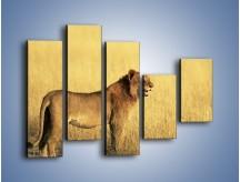 Obraz na płótnie – Czujny wzrok lwicy – pięcioczęściowy Z091W4