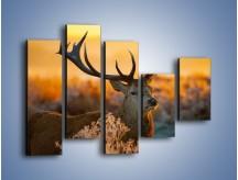 Obraz na płótnie – Ciężkie poroże jelenia – pięcioczęściowy Z165W4