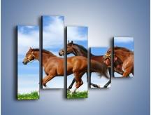 Obraz na płótnie – Galopujące stado brązowych koni – pięcioczęściowy Z172W4