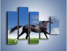 Obraz na płótnie – Dziki koń w biegu – pięcioczęściowy Z194W4