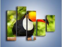 Obraz na płótnie – Kolorowy dziób tukana – pięcioczęściowy Z195W4