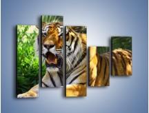 Obraz na płótnie – Cała duma tygrysa – pięcioczęściowy Z199W4