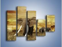 Obraz na płótnie – Drogocenne kły słonia – pięcioczęściowy Z214W4