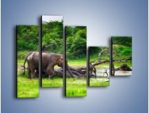 Obraz na płótnie – Kąpiel ze słoniem – pięcioczęściowy Z216W4