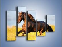 Obraz na płótnie – Dziki koń i jego mięśnie – pięcioczęściowy Z232W4