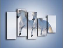 Obraz na płótnie – Gonitwa konna w bieli – pięcioczęściowy Z240W4