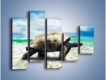 Obraz na płótnie – Jak tu nie kochać żółwi – pięcioczęściowy Z251W4