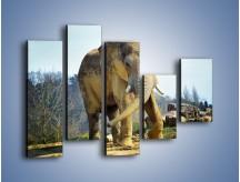 Obraz na płótnie – Ciężkie życie słonia – pięcioczęściowy Z273W4