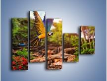 Obraz na płótnie – Kolorowa papuga w locie – pięcioczęściowy Z280W4