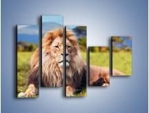 Obraz na płótnie – Dostojny lew na sawannie – pięcioczęściowy Z282W4