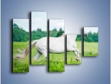 Obraz na płótnie – Biały koń i leśna polana – pięcioczęściowy Z317W4