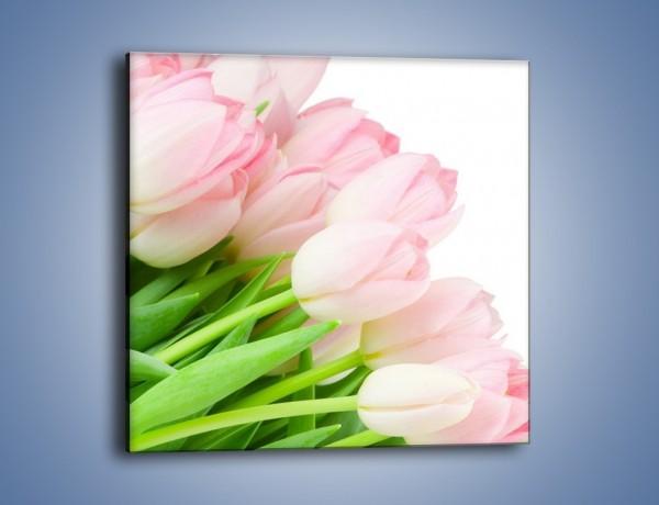 Obraz na płótnie – Światło w kwiatach – jednoczęściowy kwadratowy K183