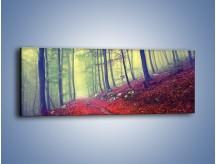 Obraz na płótnie – Bardzo wąską ścieżką leśną – jednoczęściowy panoramiczny KN1335A