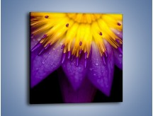 Obraz na płótnie – Baśniowy kwiat z tajemnicą – jednoczęściowy kwadratowy K189