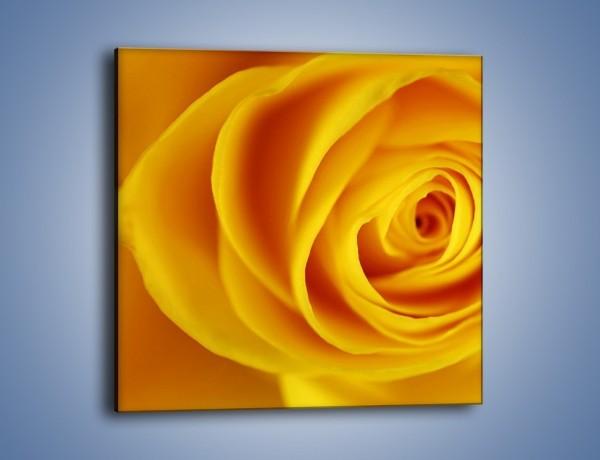 Obraz na płótnie – Kwiaty w kolorze zimy – jednoczęściowy kwadratowy K191