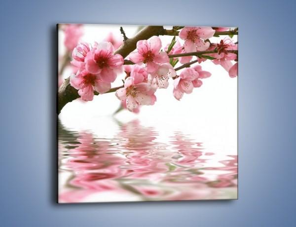 Obraz na płótnie – Gałązka z kwiatami pochylona nad wodą – jednoczęściowy kwadratowy K193