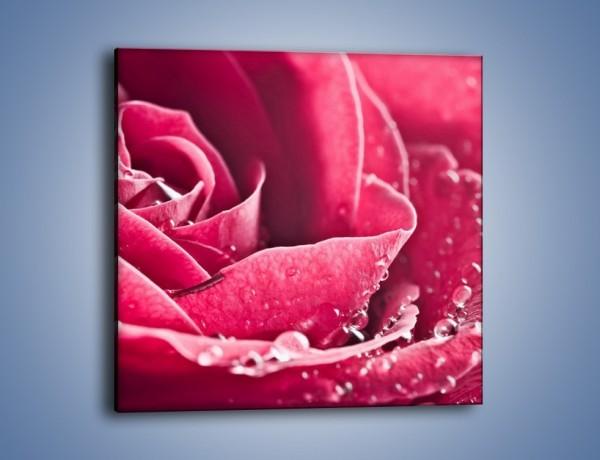 Obraz na płótnie – Różane krople – jednoczęściowy kwadratowy K194