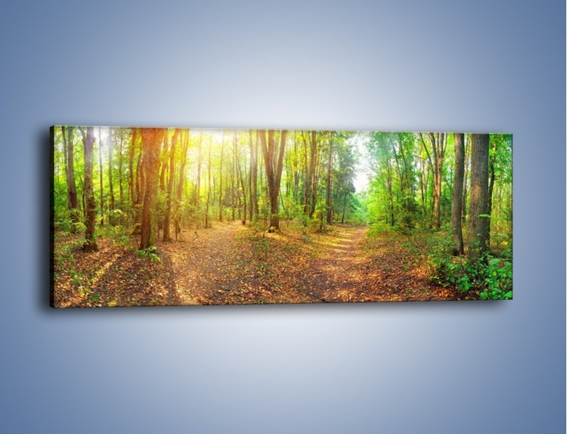 Obraz na płótnie – Przejrzysty piękny las – jednoczęściowy panoramiczny KN1344A